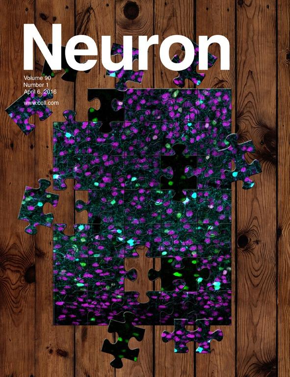 NEURON_90_1.c1.indd